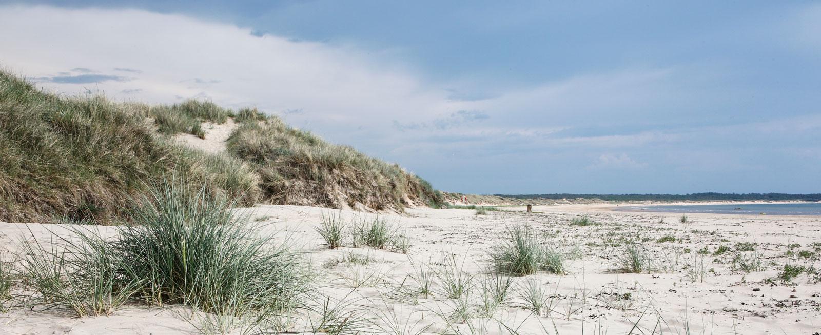 Planteringen av strandråg och sandrör i början av 1800-talet minskade sandflykten och sanddynerna bevarades.