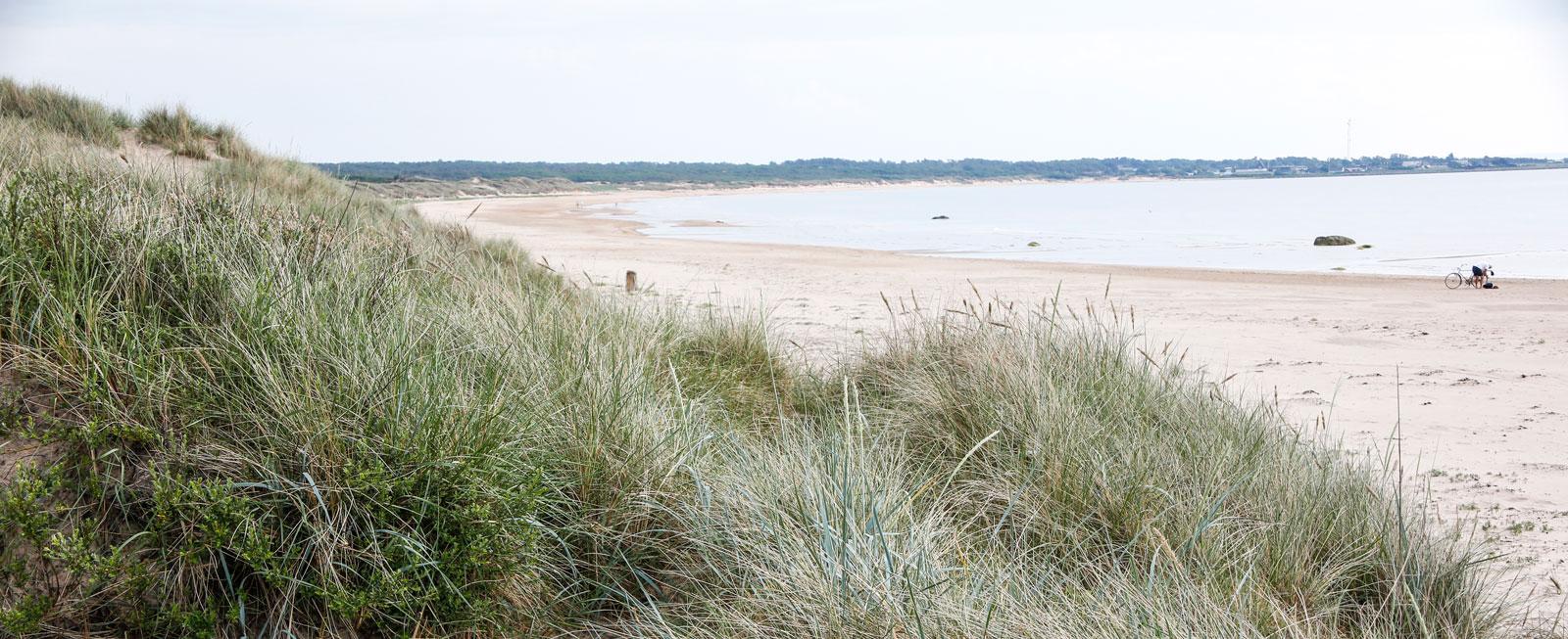 Sanddynerna följer hela strandlinjen.