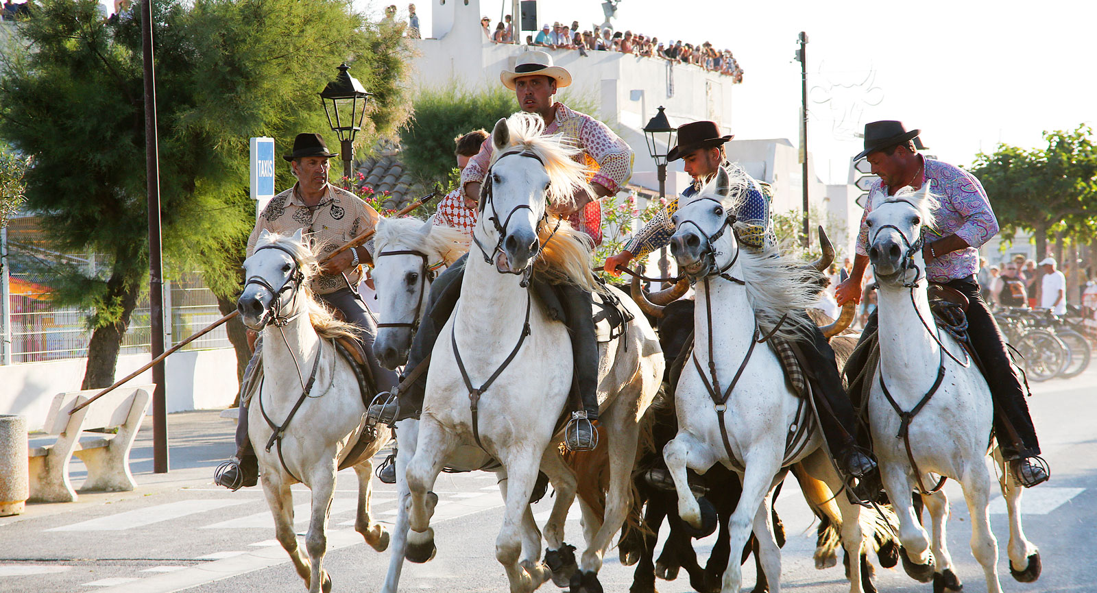 När uppvisningen är klar galopperar hästar och ryttare med lösdrivna tjurar rakt igenom stadskärnan där människor sitter och äter längs vägen.