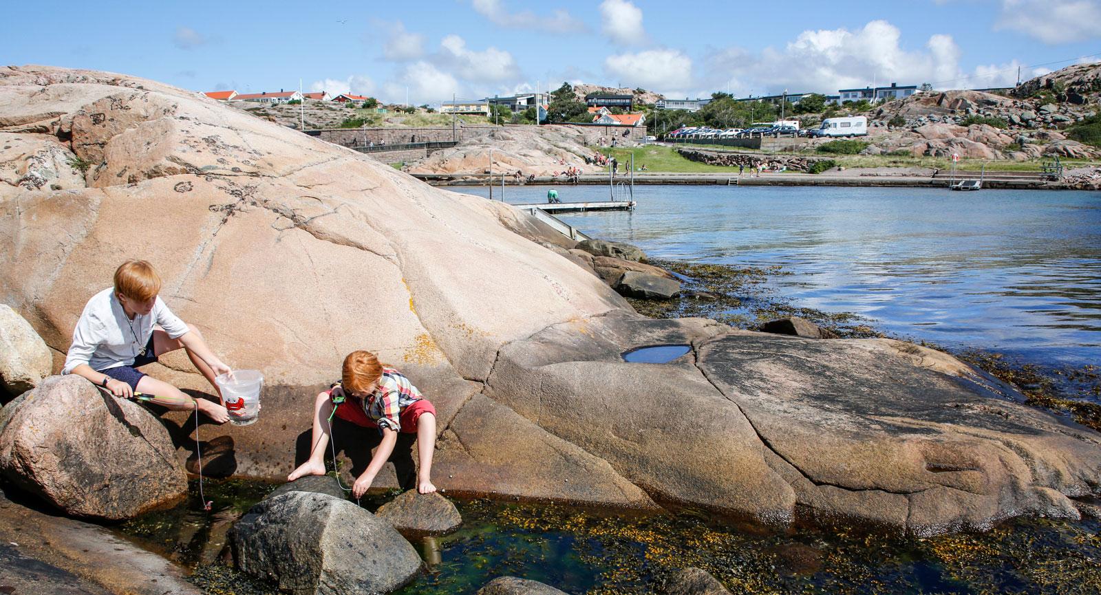 Följ med på strandskolan eller rota runt bland blåstången på egen hand.