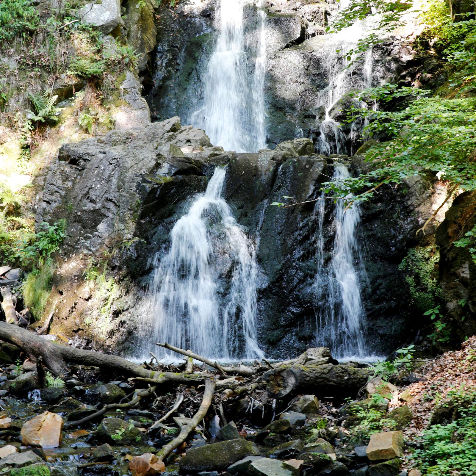 Forsakar Naturreservat i Degeberga.