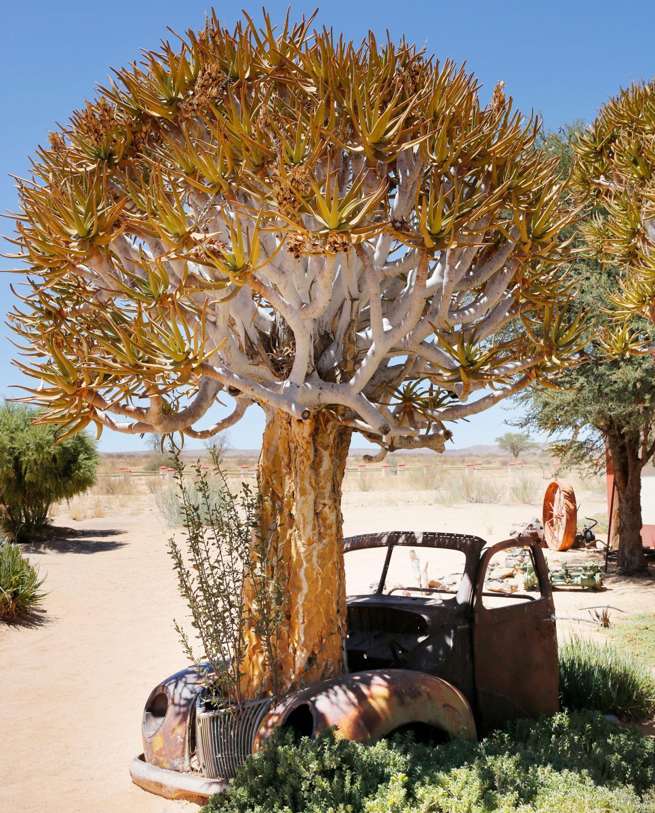 Roadhouse är en slags blandning av campingplats, restaurang och ett välsorterat museum.