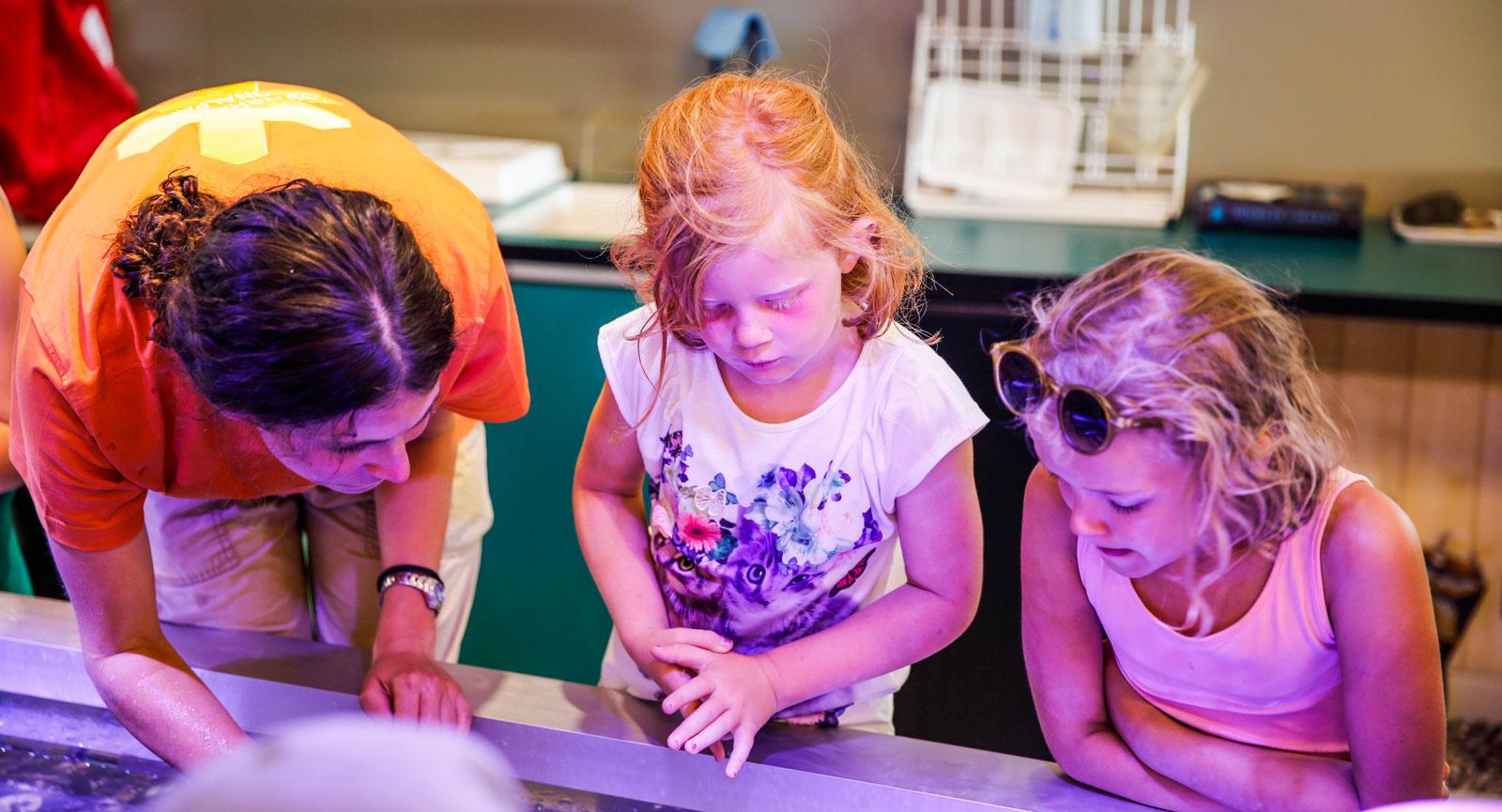 På Naturum kan både barn och vuxna lära sig mer om djur och natur.