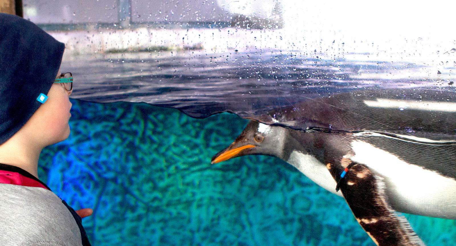 Inte bara lego. Här finns även riktiga pingviner!