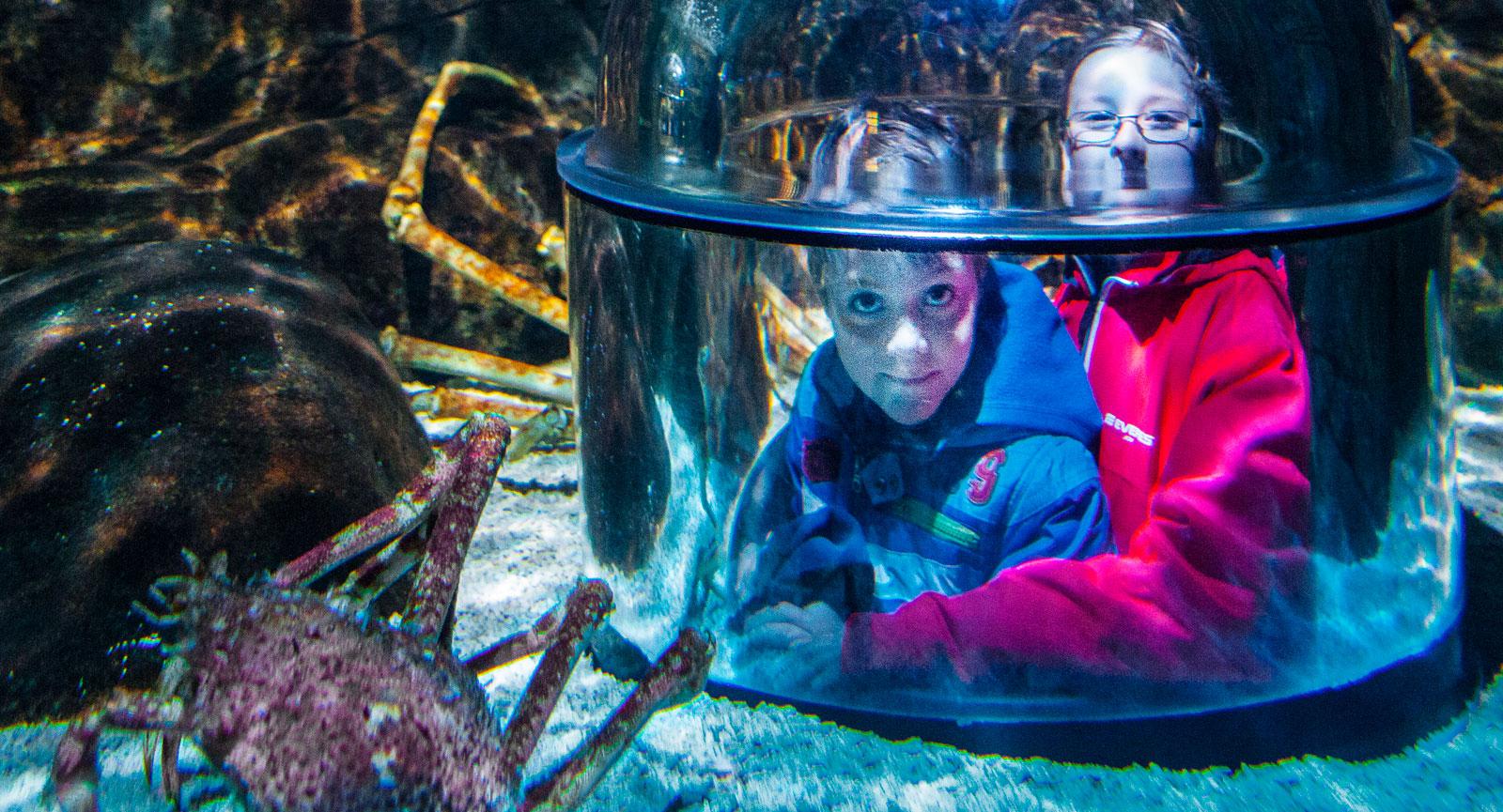 dykarklocka ser det ut som men det är en tunnel under akvariet med fönsterkupor att kika ut genom.
