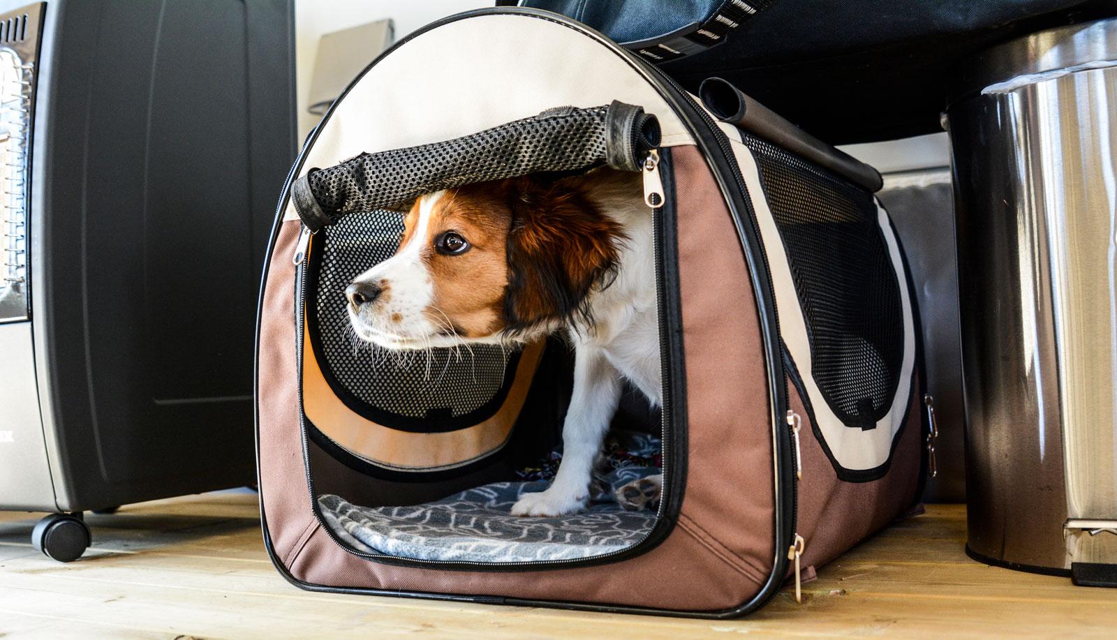 Hunden Alice har sitt eget lilla krypin när behovet av egentid gör sig påmint.