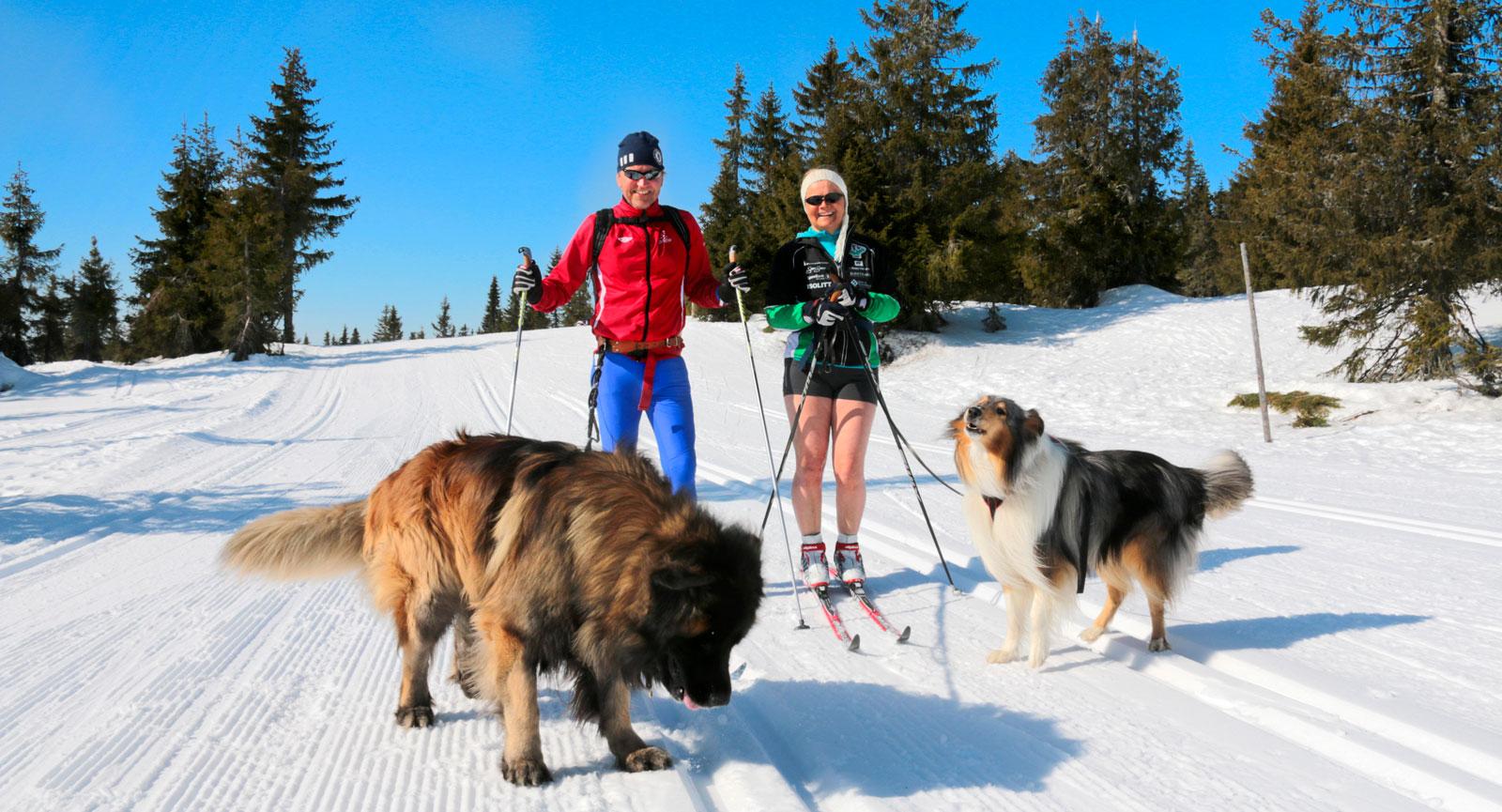 Spårare. Camparna Dag och Heidi Olaussen på träningstur med hundarna Vinnie och Alex som också tycks ha fått upp ett spår.