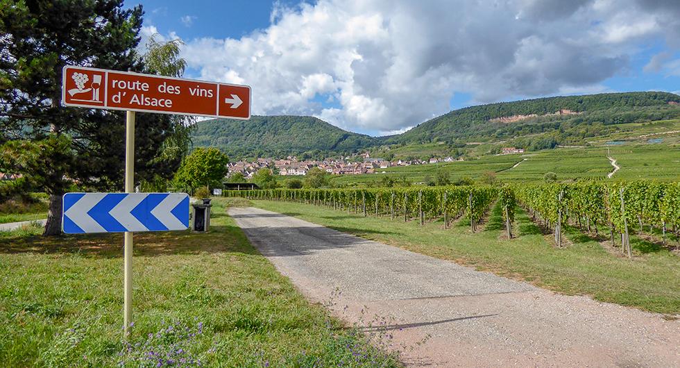 Vinvägen slingrar sig vackert fram genom Alsace.