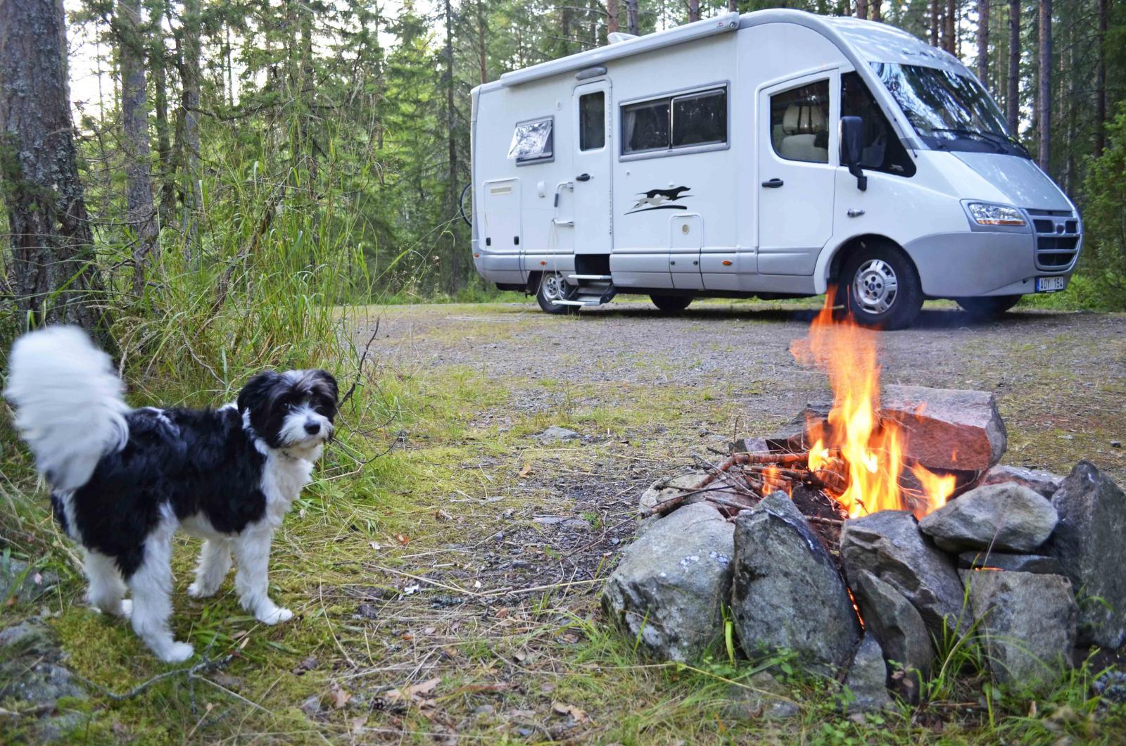 Cheeta väntar på korven som ska grillas över den högst privata elden i Glaskogens camping i västra Värmland.