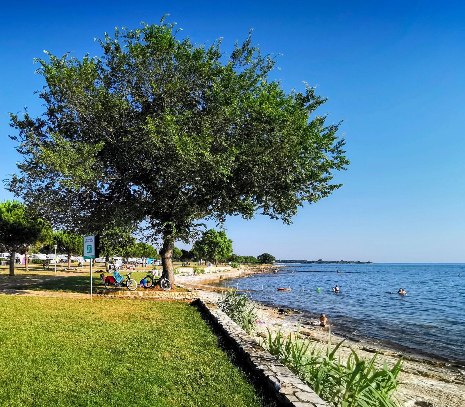 Campingens gräsyta går ända fram till havet. Strandpromenaden intill är populär.