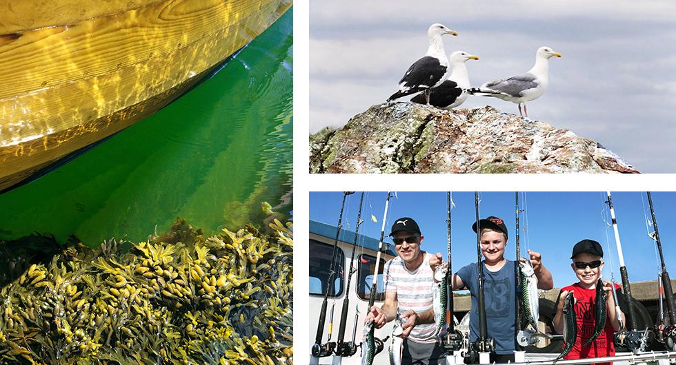 Västkustens attribut är många men havsgrönt vatten, blåstång  och en gammal träbåts gulnande bord är talande nog.    Karaktärsfåglar. De mörka på ryggen är antingen havstrutar eller silltrutar. De ljusare gråtrutar.    Västkustfisket är en spillra mot förr men sommartid kommer makrillen in från havet i stora stim. En turbåt har just anlänt bryggan i Hunnebostrand.