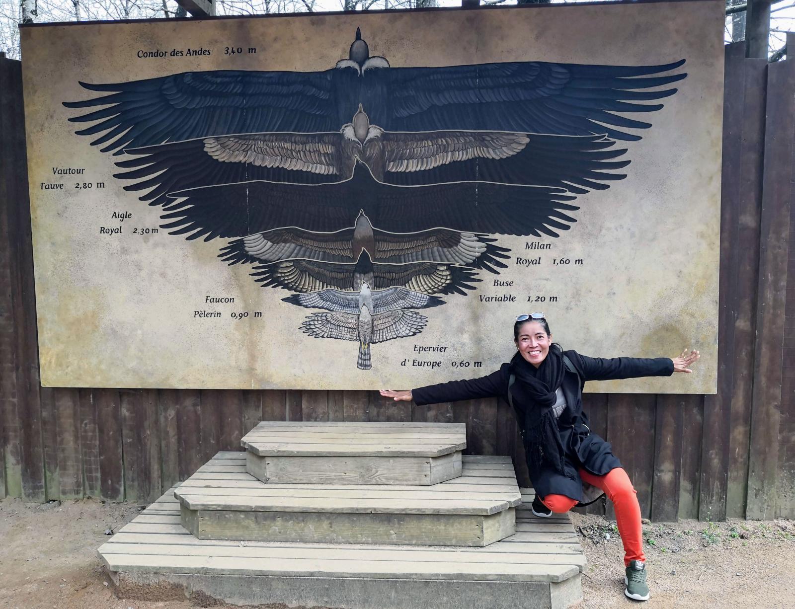 Några av de fåglar som föds upp hos Puy du Fou har rejält vingspann.