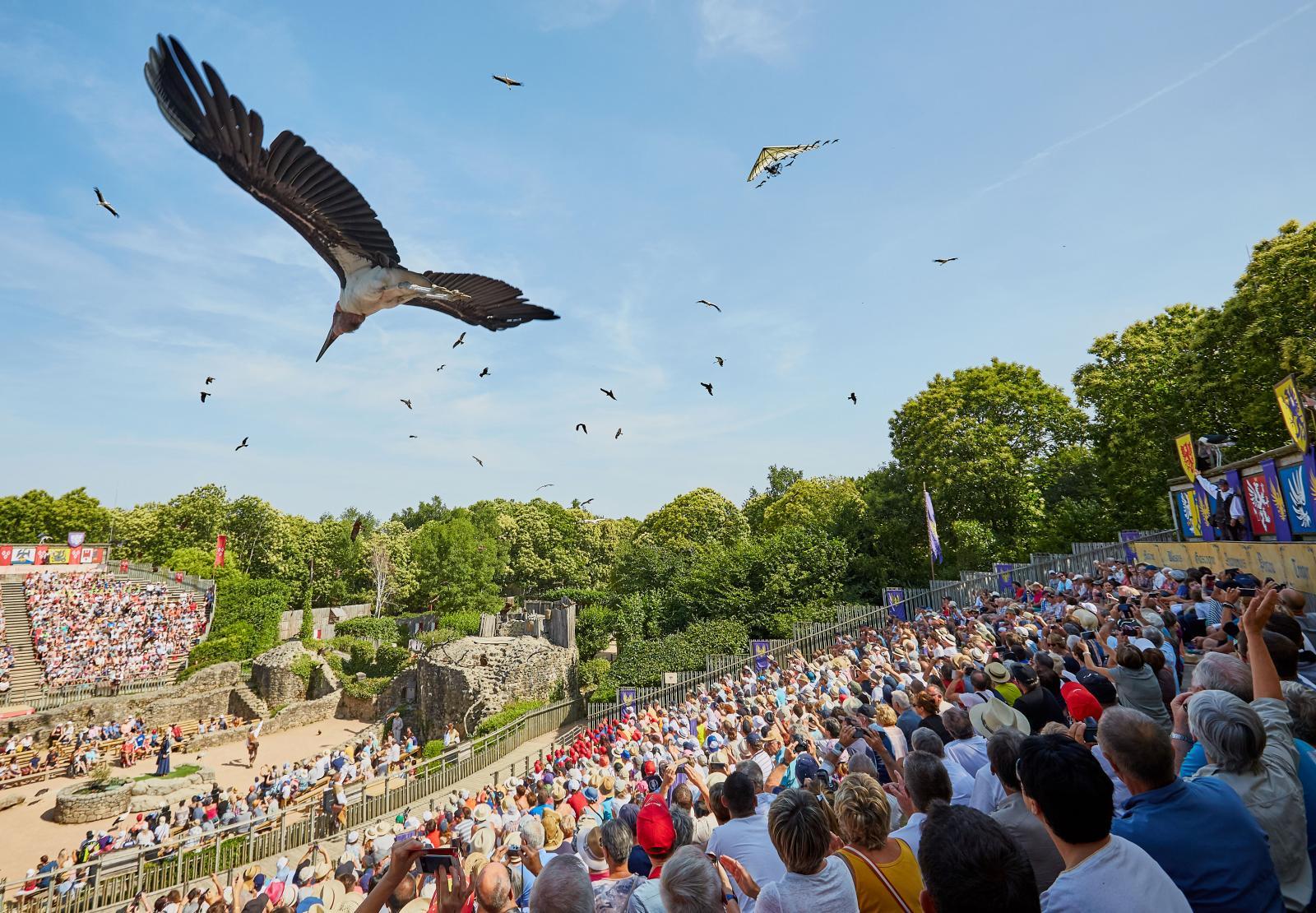Fågelshowen avslutas med att hundratals mäktiga fåglar cirklar över våra huvuden. Vithövdad havsörn, kondor, gamar och falkar ingår bland många andra i denna show.