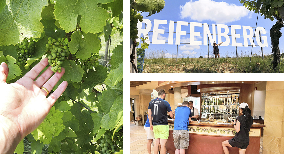 Druvorna var näst intill nyfödda vid vårt besök i slutet av juni. || Hollywood nästa? De stora skyltarna visar druvsorterna. || Vinprovningen går inte av för hackor och vi blev rentav lite berusade.