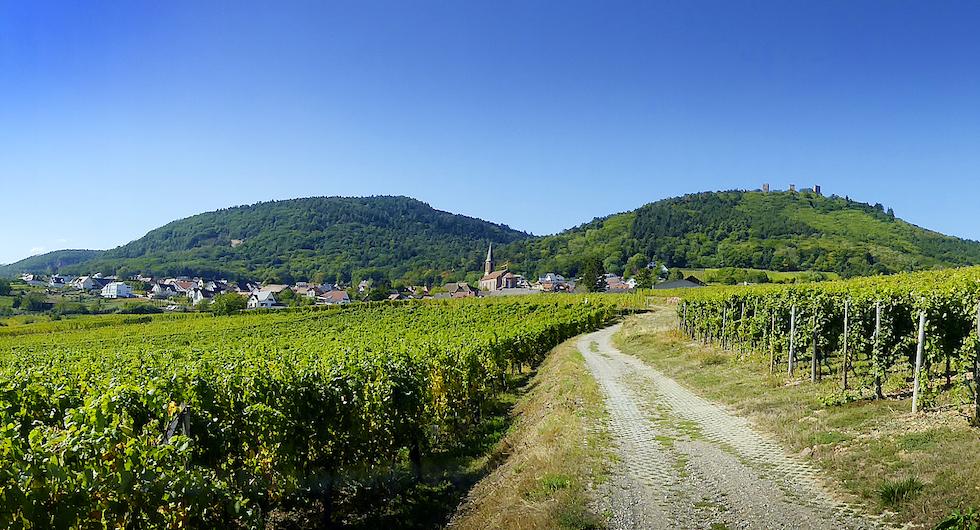 Alsace, landskapet runt Strasbourg, domineras av vinodlingar som sträcker sig upp mot bergen.