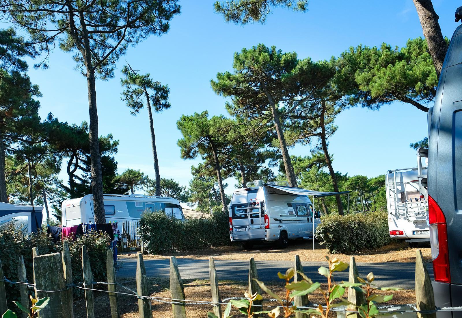 Campingplatserna når man genom asfalterade vägar som slingrar sig mellan tallarna.