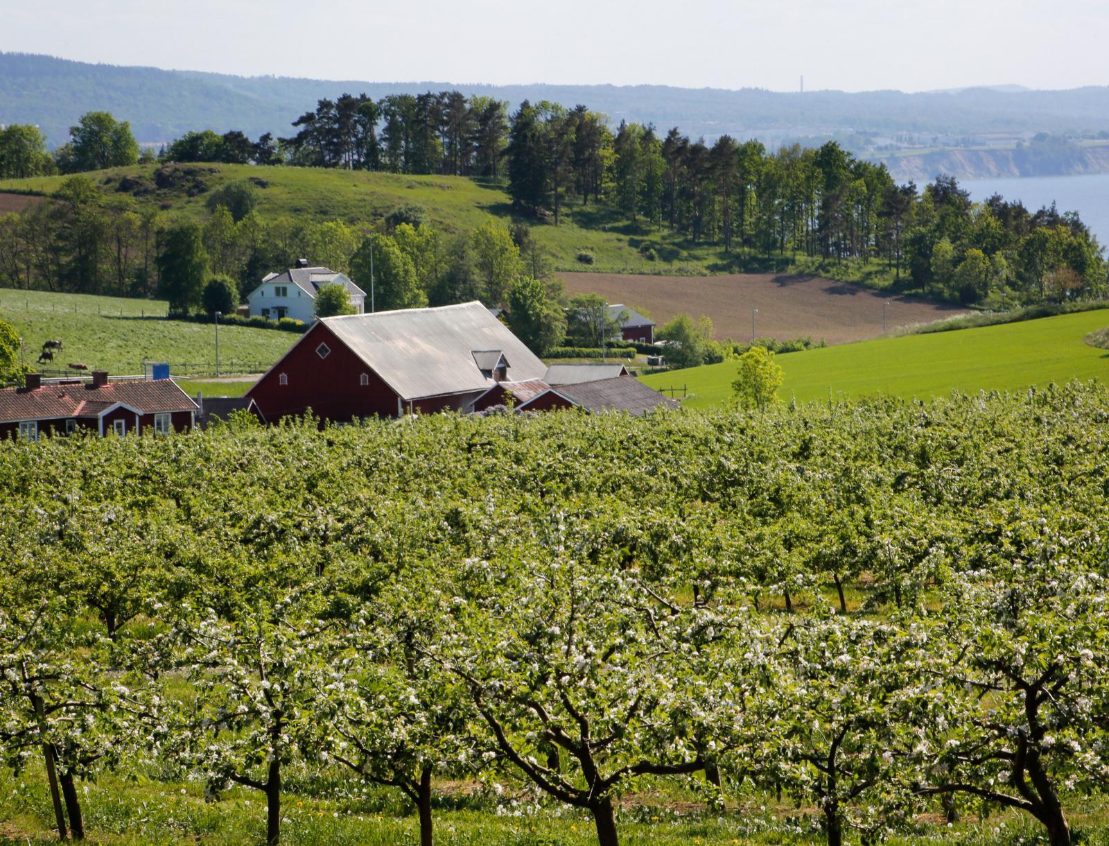 Dalgångarna norr om Huskvarna är riktiga äppelodlartrakter.