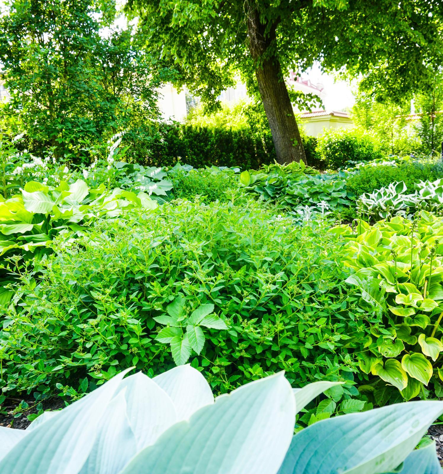 Missa inte den botaniska trädgården som är värd ett besök.