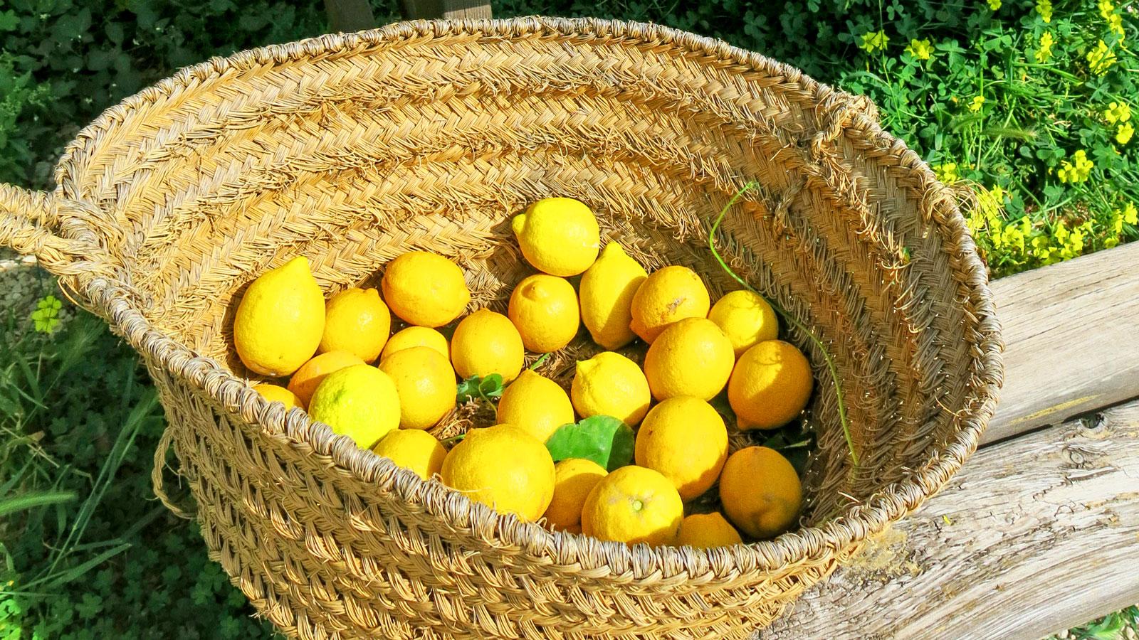 Gratis frukter finns att hämta till kvällens G&T utanför receptionen.