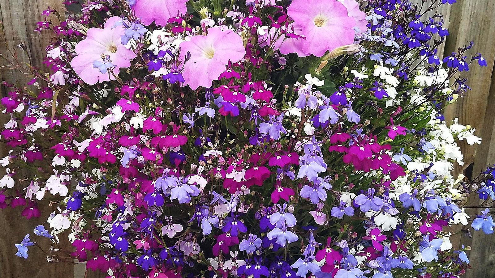 Det är gott om vackra blomsteruppsättningar.