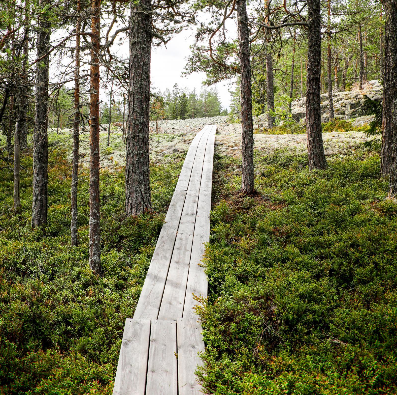 Fina promenadstråk på spänger genom skogen.
