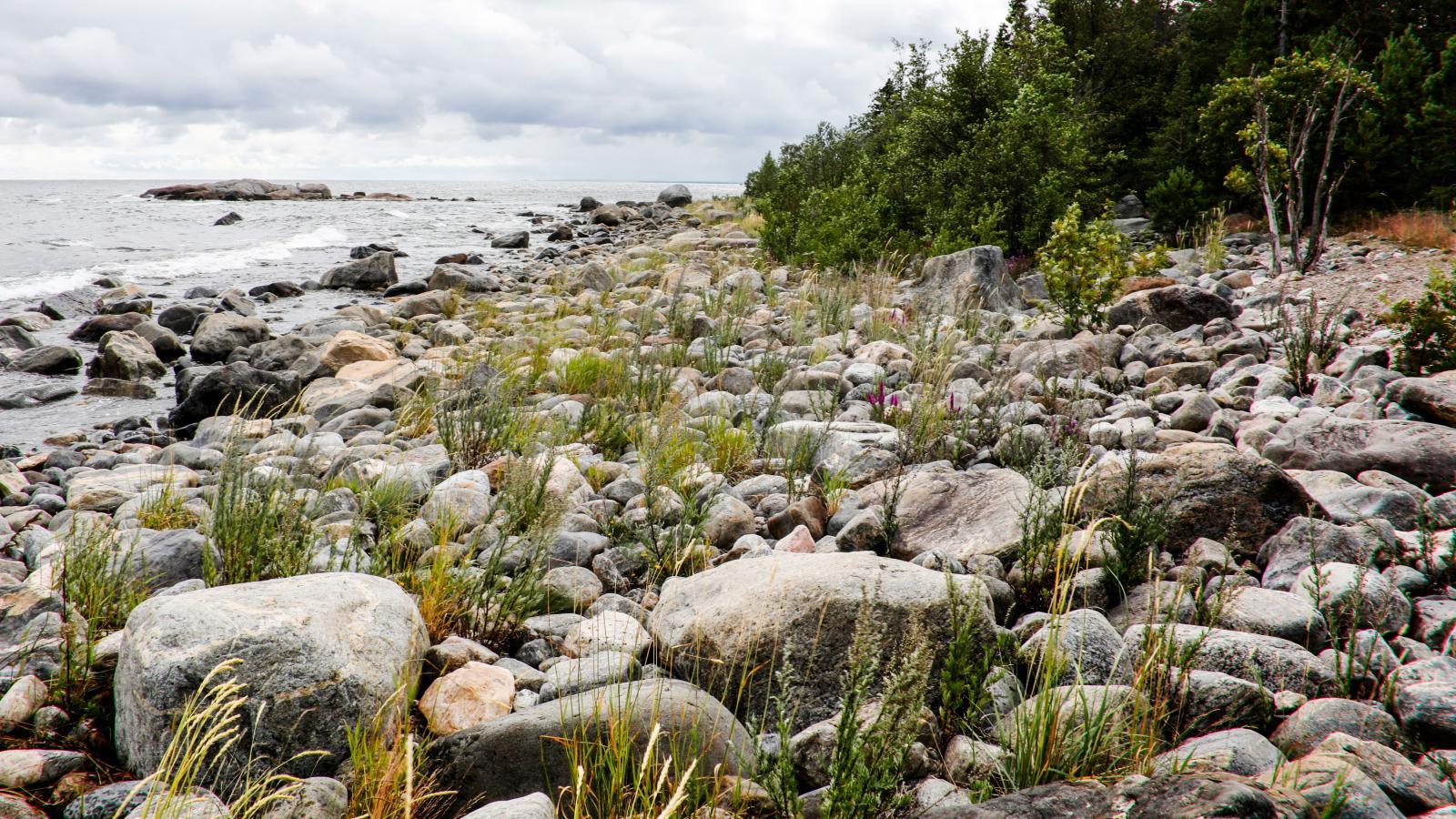 Lugnet vid kusten är påtagligt när man kommer ner till strandremsan.