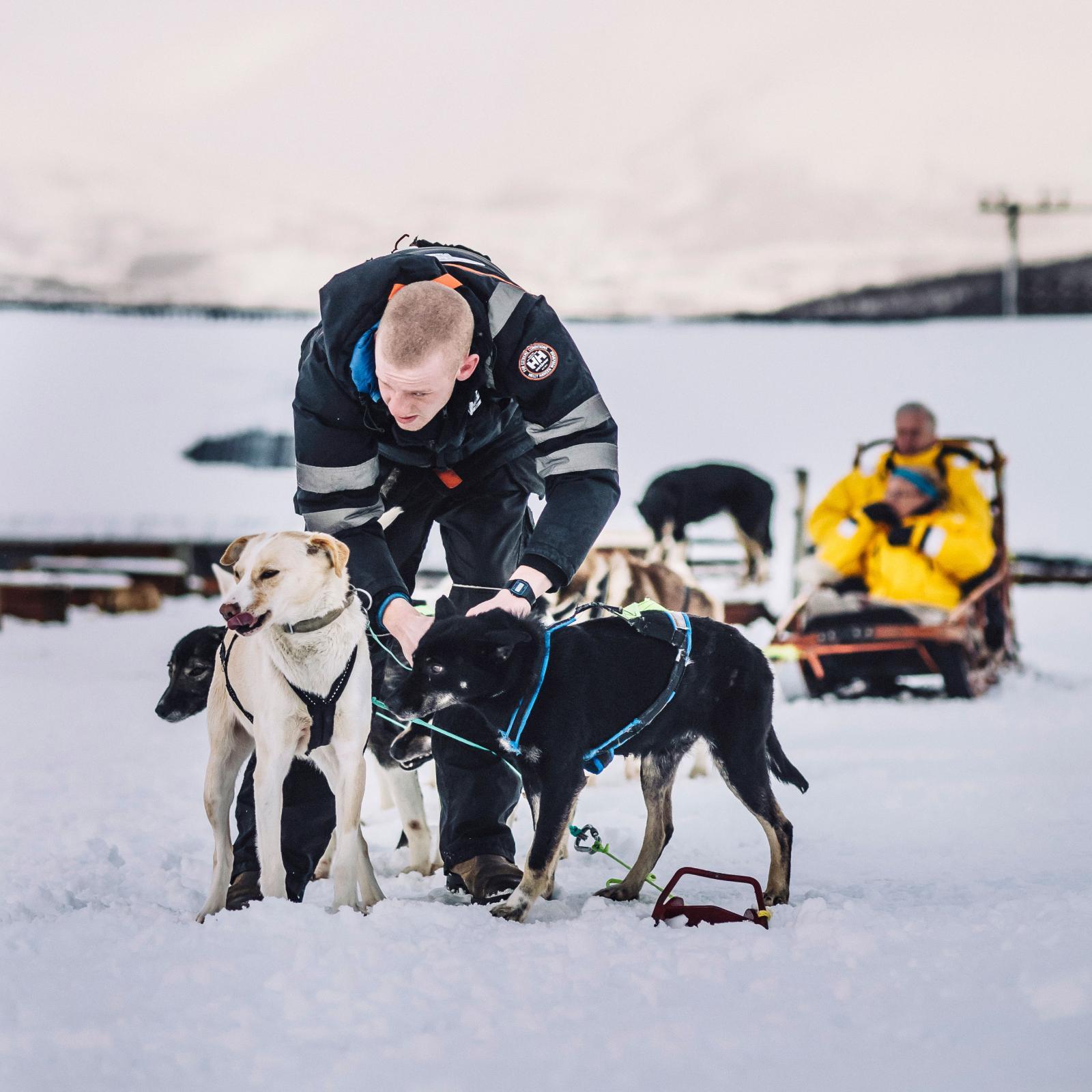 Redo. Max förbereder ännu en tur med hundspann i Tromsös storslagna landskap.