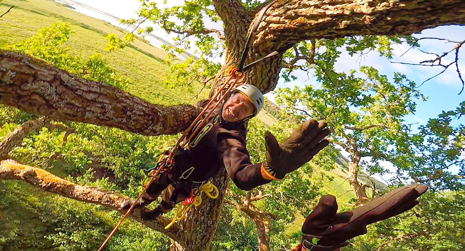 En klätterkurs för arborister ledde till ett nytt intresse.