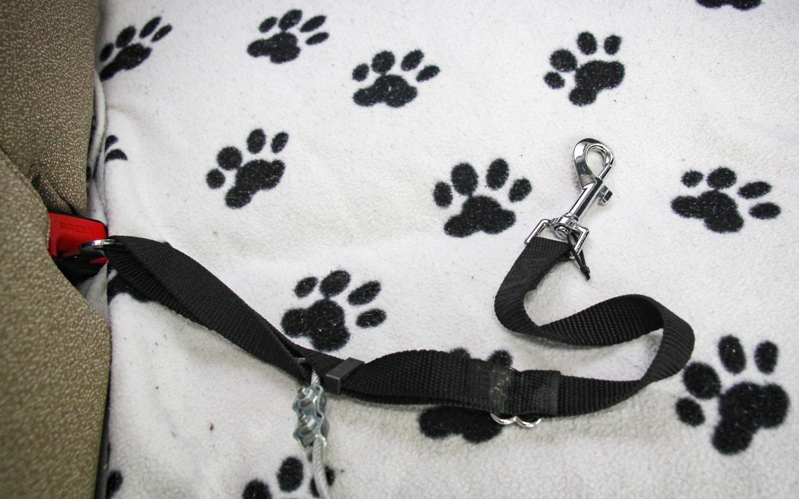 Säkerhetsbältet kan kopplas direkt till hundens sele, eller så kan en vajer användas mellan bältet och selen.