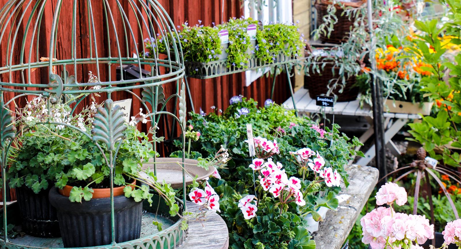 Smedjans trädgård är en grön oas där du kan köpa plantor.