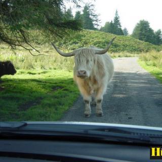 Foto: ,Scotland sept 2006 (Resa)