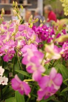 Orkidéparadis i Åkeshov