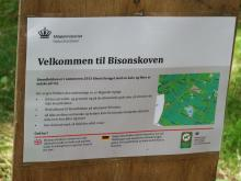 Restips: Möt en bison på Bornholm