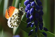 Variera motiven mellan det lilla och det stora. Vid sidan om personer och miljö kan en bild på en fjäril bli ett intressant delmotiv.