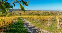 Eguisheim, en vinby som ligger i en sänka omgiven av vinfält så långt ögat når.