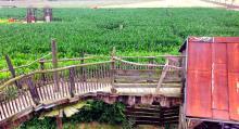 Vilse. Labyrinten i majsfältet verkade uppskattad hos de yngre.