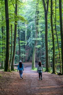 Promenaden genom trollskog till klippa tar 20 minuter.