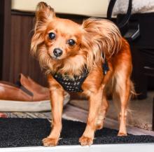 Adoptivhunden Nadja har rötter i Östeuropa och följer gärna med på äventyr.