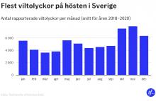Kraftig ökning av viltolyckor sedan 2010