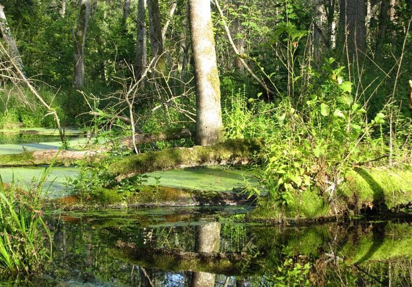 Bildspel: Białowieża nationalpark