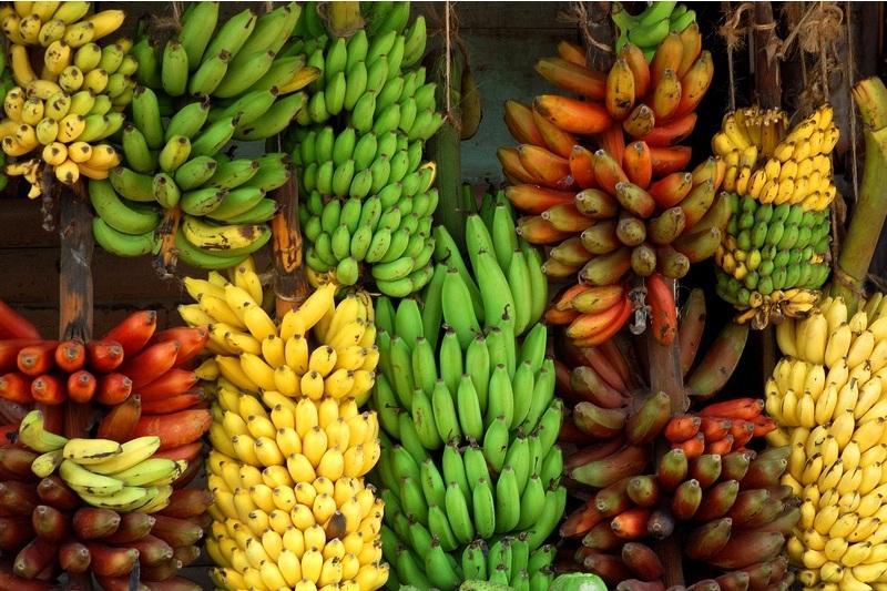 är bananer bär