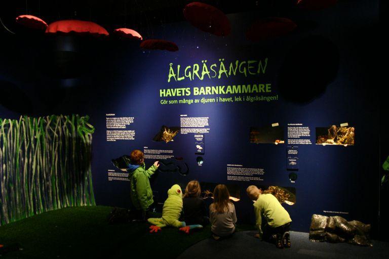 Nytt klappakvarium och ålgräsäng på Havets Hus