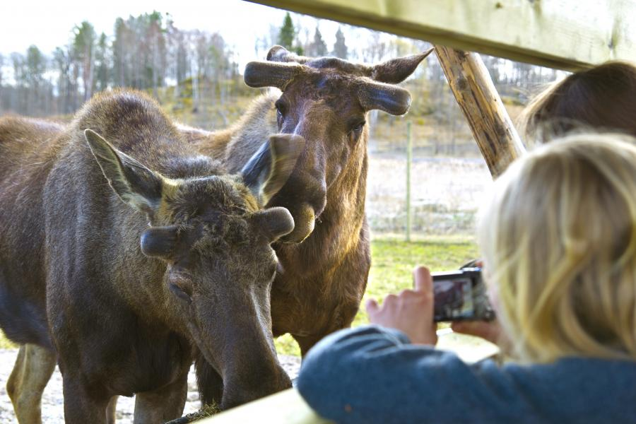 Ny viltpark i Södermanland