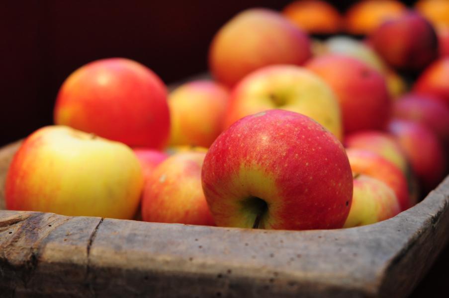 Päron,äpplen och plommon på Botaniska