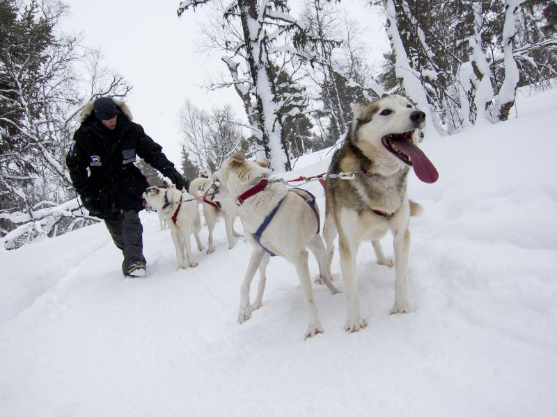 Vinterkul i norr