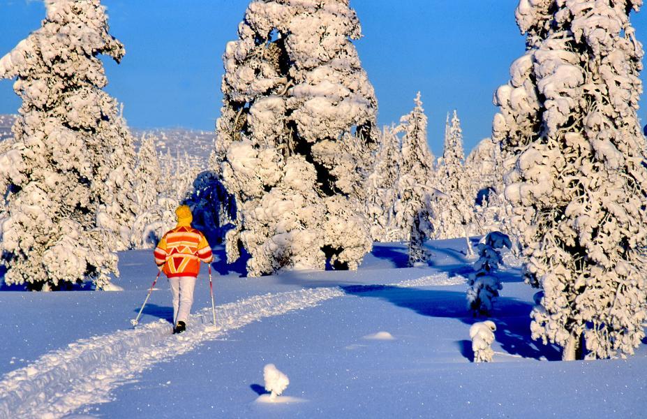 Behåll skidorna