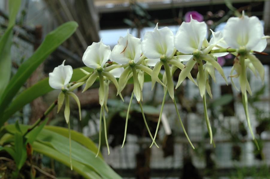 Kul på Botaniska