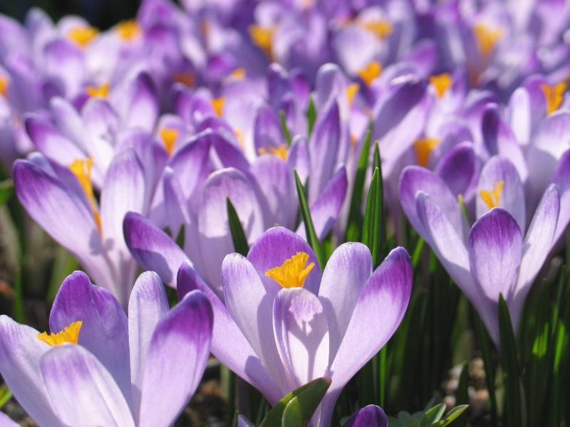 Botaniska trädgården i april
