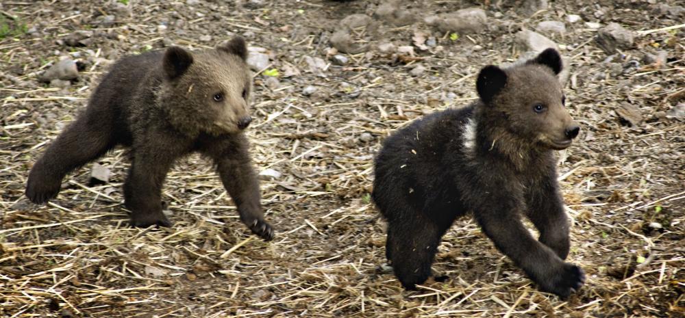 Björnarna har vaknat