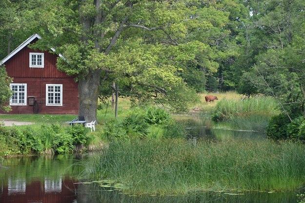 Alsterån i Kalmar län är en av många vinnare när WWF valt pärlor i Sverige.